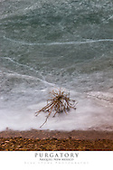 20x30 poster print of a lifeless tree that is trapped in ice.