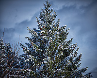 Pine tree and power line after a winter snowstorm. Image taken with a Fuji X-T2 camera and 100-400 mm lens (ISO 200, 100 mm, f/5.6, 1/1800 sec).