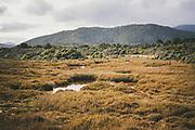 One of tarns between Doughboy Hill and Rakeahua River, The Southern Circuit, Stewart Island / Rakiura, New Zealand Ⓒ Davis Ulands | davisulands.com