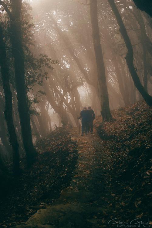 People trekking in the Annapurna region walk through the morning mist in a Rhododendron forest, Ghorepani to Tadapani Trek, Ghorepani, Nepal