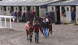 Horses and Grooms before racing at Thurles Racecourse.