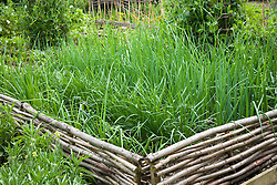 Hazel fences around the onion bed in the vegetable garden. Confirm