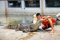 Crocodile show Samphran Elephant Ground & Zoo Nakhon Pathom province, Thailand.