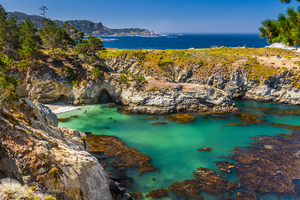 The view of China Cove with it's translucent water and kelp, Point Lobos State Reserve, south of Carmel, California