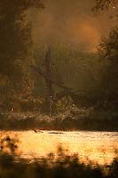 Swamp at dawn and dyke, Gornje Podunavlje Special Nature Reserve, Serbia