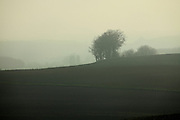 morning fog in rural landscape