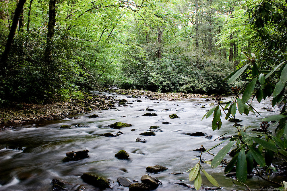 One of the many trout streams in the Smokey mountains national park.