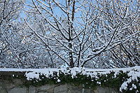 Snow covered trees in Dublin Ireland during the cold snap in November 2010