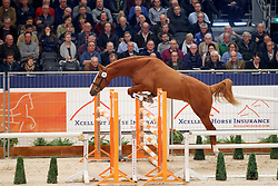 040, Kincsem<br /> KWPN Stallionshow - 's Hertogenbosch 2018<br /> © Hippo Foto - Dirk Caremans<br /> 31/01/2018