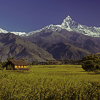 NEPAL, HIMALAYA. 6997-meter Machhapuchhare Peak above rice paddies in Pokhara Valley.