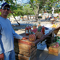 Central America, Cuba, Santa Clara. Pineapple and radishes are today's fresh harvest this vendor is selling, along with a salsa he makes.