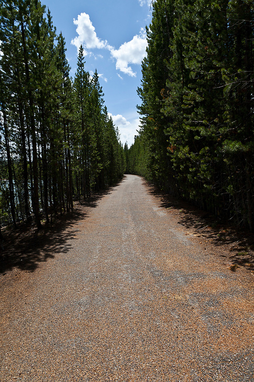 Lodge Pole Pine lines roadway along Colter Bay on Jackson Lake in Teton National Park in Wyoming. Licensing and Open Edition Prints.