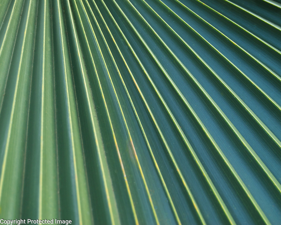 I grew up with palms in Phoenix, and have always loved their leading lines. I took this shot in Hawaii at a botanical garden.