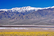 Lake Manly and Desert Gold (Geraea canescens) under snow-covered  Telescope Peak, Death Valley National Park, California