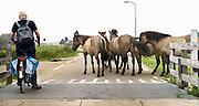 Nederland, Ubbergen, 4-7-2013Een groepje konikpaarden heeft besloten om op de wildoversteekplaats tussen het wildrooster te blijven staan, en zo het verkeer op de dijk tot stoppen te dwingen.Foto: Flip Franssen/Hollandse Hoogte