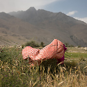Cloth drying. The traditional life of the Wakhi people, in the Wakhan corridor, amongst the Pamir mountains.