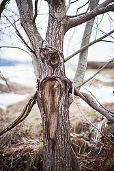 Face on tree trunk in forest