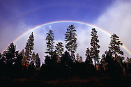 A summer rainstorm in the Deschutes National Forest in Central Oregon ends with a rainbow over the Ponderosa pine trees..July, 2004..