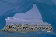 Atka Bay Penguin Rookery and Ice Arch<br />