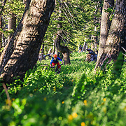Andrew Whiteford rides the single track of the Philip's Ridge Trail in Teton County, Wyoming.