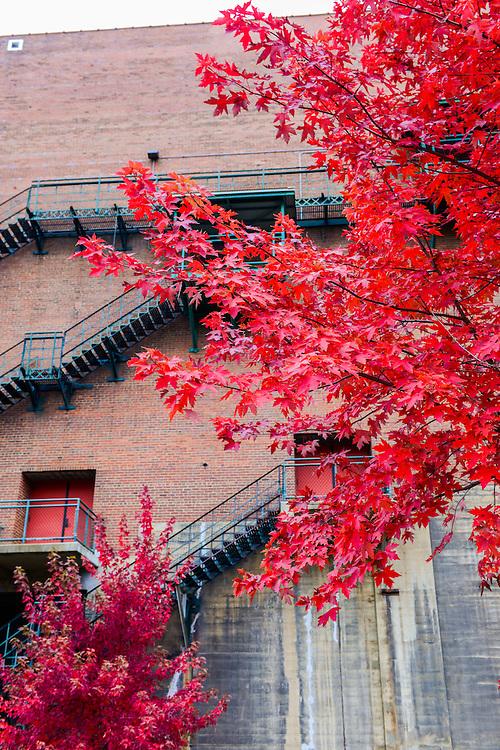 Fall leaves at Lock 4 park.