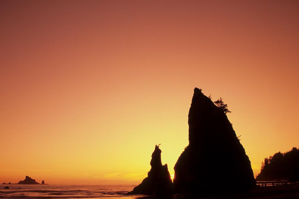 Sea stacks and reflections at sunset, Rialto Beach, Olympic National Park, Washington
