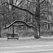 The late day shadows help to accent this peaceful scene at Duke Farms, Hillsborough, NJ.  The tree is clearly old and grows in many directions including one branch that looks like it's sheltering the bench.