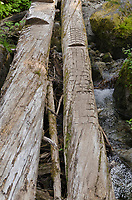 Crude makeshift bridge over creek on trail into Marriott Basin, Coast Mountains British Columbia