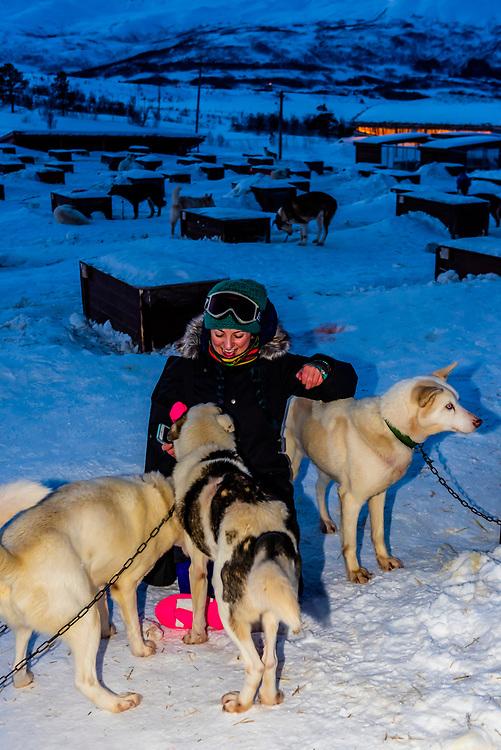 Sled dogs, Dog sledding, Tromso Wilderness Centre (Tromso Villmarkssenter), Kvaloya Island, near Tromso, Arctic, Northern Norway.