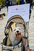 A dog in a pram with a placard reading Stop Brexit. #Wooferendum joins pet owners to take part in an anti Brexit Wooferendum rally on October 07, 2018 in London, England to protest against Britain leaving the European Union.