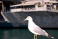 Seagull in San Diego