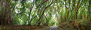Nuuanu tree tunnel in honolulu, Hawaii