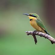 Punda Maria. Kruger National Park. South Africa. Organization for Tropical Studies Trip 2009.
