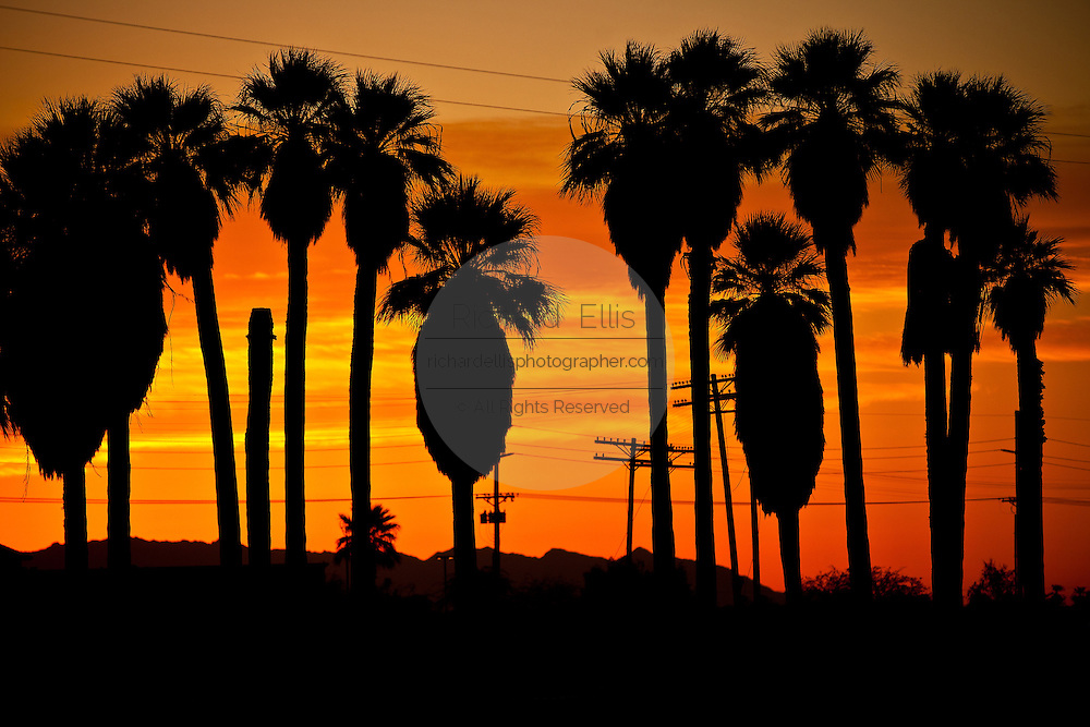 Sunrise over palm trees along the coast of the Salton Sea Imperial Valley, CA.