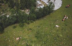 THEMENBILD - Kühe auf einer Weide nahe der A10 Tauernautobahn, aufgenommen am 27. Juli 2019 in Flachau, Österreich // Cows in a pasture near the A10 Tauern motorway, Flachau, Austria on 2019/07/27. EXPA Pictures © 2019, PhotoCredit: EXPA/ JFK