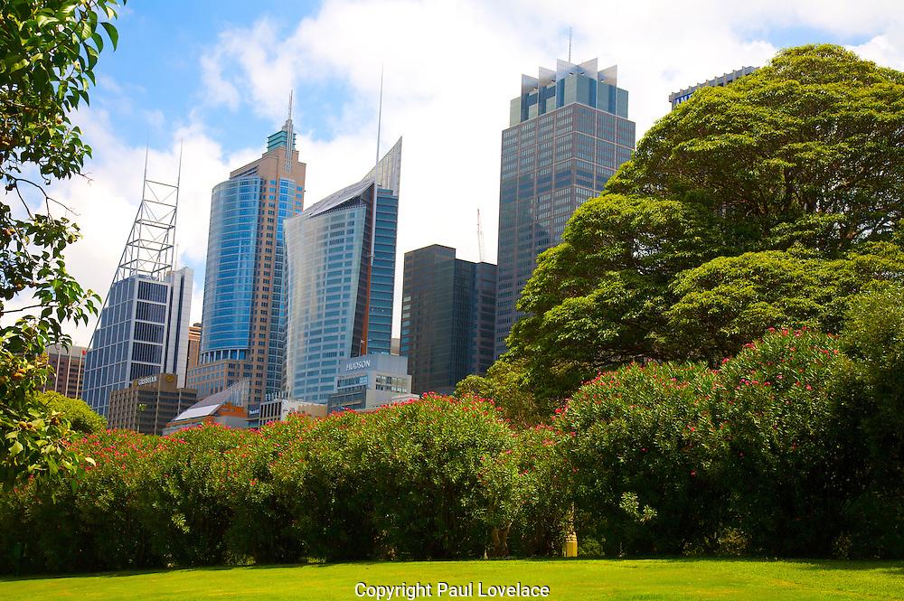 Sydney CBD from the Botanic Gardens.
