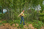 Bamboo Giant Panda Food