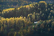 Today, forests cover approximately 37%, or 119,000 km2, of the Norwegian mainland. But a century ago, Norway was on the brink of losing its forests forever. After centuries of logging for timber and firewood, the country had consumed much of this previously vast natural resource. In the late 1800s the government realized that soon there would be no forests left, so they stepped in. Today, the annual harvest of wood only takes about half the amount that grows each year, so overall the forests are growing. This forest growth is enough to offset roughly 60% of the country's annual greenhouse gas emissions.