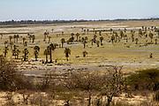 Africa, Tanzania, Lake Eyasi National Park landscape at a low water mark