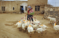 Ali Ipak and his wife Ayse feed their turkeys that were given to them by the Food and Agricultural Organization telefood project December 13, 2005 in central Turkey, Konya in Kutoren district, about 400 kilometers from Ankara. The projects are meant to improve rural poor families livelihoods. (Ami Vitale)