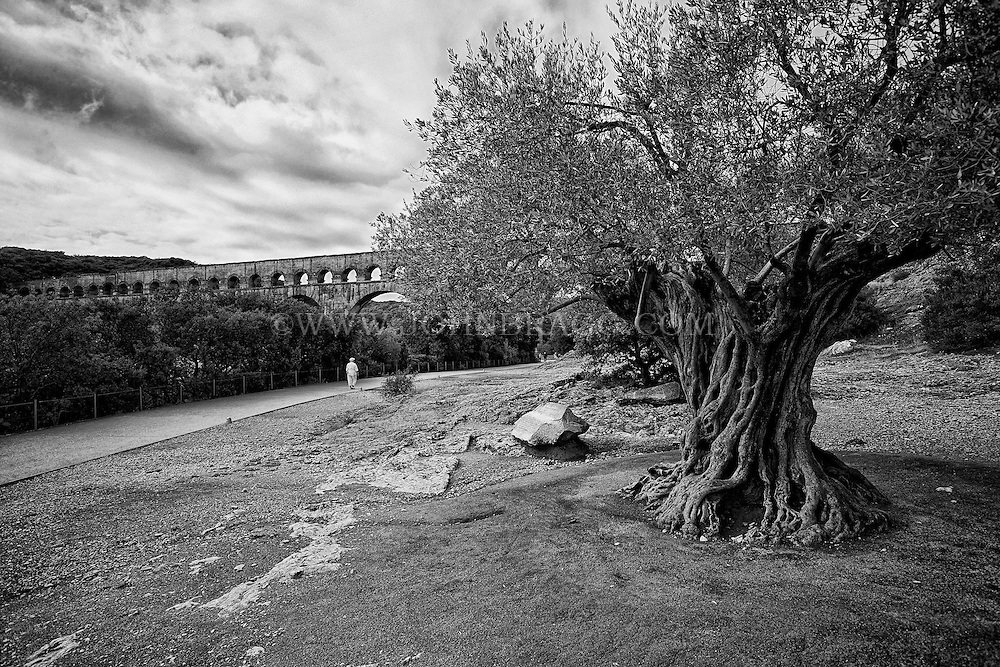 Black and white view of Pont du Gard (Roman Aqueduct) and rare 1000 year old olive tree, Vers-Pont-du-Gard, France.