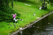 woman feeds gulls on the Canal in Bastejkalna park, Riga, Latvia