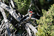 Wildlife photography Gila Valley, NM USA