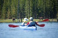 Sea kayakers watching elk. Jackson Lake Grand Teton National Park, WY.