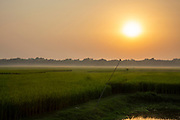 Sunrise and morning mist over a paddy field on the 2nd of October 2018 in Satkhira District, Bangladesh. Satkhira is a district in southwestern Bangladesh and is part of Khulna Division. It lies along the border with West Bengal, India. It is on the bank of the Arpangachhia River. (photo by Andrew Aitchison / In pictures via Getty Images)
