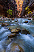 The Virgin River, filled with boulders, carves its path through The Narrows in Zion National Park.