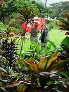 Lyon Arboretum, Manoa Vally, Honolulu, Hawaii