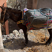 Africa, Morocco, Imlil. Donkey of Berber village in Imlil, Atlas Mountains.