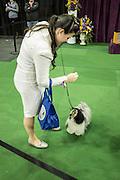 New York, NY - 16 February 2016. A contestant in the Junior Division gives her dog a treat prior to entering the ring at the 140th Westminster Kennel Club Dog show in Madison Square Garden.