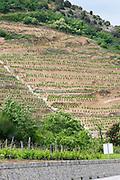 vineyard rhone france